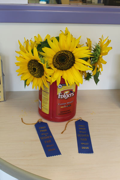 winning-sunflowers.jpg